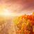виноградник · закат · осень · пейзаж · красоту - Сток-фото © lunamarina