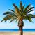 denia palm trees in marineta casiana beach stock photo © lunamarina