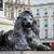 london trafalgar square lion in uk stock photo © lunamarina