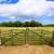 ülke · bahçe · kapı · gökyüzü · çiçek - stok fotoğraf © lunamarina