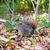 szürke · mókus · fa · posta · természet · állat - stock fotó © lunamarina