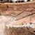 Roman · amfiteatr · Hiszpania · budynku · teatr · architektury - zdjęcia stock © lunamarina