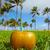 Miami · dél · tengerpart · kókusz · Florida · ital - stock fotó © lunamarina