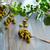 olive · texture · pattern · mercato · sfondo · verde - foto d'archivio © lunamarina