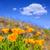 velden · vallei · himalayas · natuur · bergen · architectuur - stockfoto © lunamarina