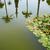 parque · jardins · Espanha · andaluzia · água · edifício - foto stock © lunamarina