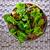 サラダドレッシング · 材料 · 新鮮な · ハーブ · リュウゼツラン · シロップ - ストックフォト © lunamarina