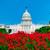 budynku · Washington · DC · różowy · kwiaty · USA · ogród - zdjęcia stock © lunamarina