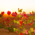 autumn golden red vineyards sunset in utiel requena stock photo © lunamarina