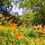 Central · Park · çiçekler · Manhattan · New · York · gökyüzü · bahar - stok fotoğraf © lunamarina