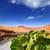 кактус · гор · Канарские · острова · небе · цветы · природы - Сток-фото © lunamarina