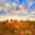 tramonto · autunno · raccolto · maturo · uve · cielo - foto d'archivio © lunamarina