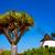 moinho · de · vento · canárias · Espanha · praia · edifício · sol - foto stock © lunamarina