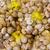 mediterranean snails in yellow nets stock photo © lunamarina