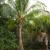 ağaçlar · hindistan · cevizi · tarla · ada · Tayland - stok fotoğraf © lunamarina