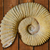 ammonites fossil in valencian community spain stock photo © lunamarina
