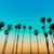 california sunset palm tree rows in santa barbara stock photo © lunamarina