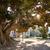 árvore · raízes · folha · beleza · rede · ramo - foto stock © lunamarina