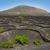 la · wijngaard · zwarte · vulkanisch · bodem - stockfoto © lunamarina