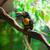 közelkép · esőerdő · Belize · utazás · piros · fekete - stock fotó © lunamarina