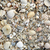 florida sanibel island beach sea shells sand us stock photo © lunamarina