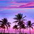 miami beach south beach sunset palm trees florida stock photo © lunamarina