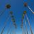 la · Los · Angeles · palm · rząd · typowy · California - zdjęcia stock © lunamarina