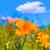 klaprozen · poppy · bloemen · oranje · Californië · voorjaar - stockfoto © lunamarina