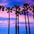 california palm trees sunset with colorful sky stock photo © lunamarina