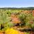 olivo · campi · rosso · suolo · Spagna · cielo · blu - foto d'archivio © lunamarina