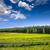 Kaliforniya · alan · dağ · manzara · dağlar · çit - stok fotoğraf © lunamarina