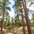 красивой · Гранд-Каньон · пейзаж · мнение · Аризона · небе - Сток-фото © lunamarina