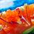 salmone · primo · piano · bacchette · piazza · piatto - foto d'archivio © lunamarina