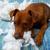 huncut · játékos · kutyakölyök · kutya · harap · párna - stock fotó © lunamarina