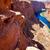 arizona colorado river on page before horseshoe bend stock photo © lunamarina