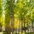 wcześnie · spadek · kolory · jesieni · drzewo · zielone · krajobraz - zdjęcia stock © lunamarina