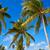 clave · oeste · Florida · playa · cielo · árbol - foto stock © lunamarina