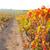 napfelkelte · szőlőskert · Spanyolország · szőlő · fa · étel - stock fotó © lunamarina