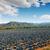marul · bitki · alan · bahar · manzara · yaz - stok fotoğraf © lunamarina