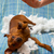 kutya · huncut · kutyakölyök · falat · párna · harap - stock fotó © lunamarina