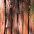madeira · México · floresta · mastigar · goma · árvore - foto stock © lunamarina