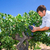 vinho · uvas · vinha · pronto · colheita - foto stock © lunamarina