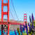 golden gate bridge san francisco purple flowers california stock photo © lunamarina