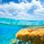 onderwater · zeegezicht · gouden · turkoois · textuur · gras - stockfoto © lunamarina