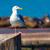 Kaliforniya · sahil · manzara · etrafında · yarımada · ABD - stok fotoğraf © lunamarina
