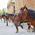 cathédrale · cheval · bâtiment · ville · Voyage - photo stock © lunamarina