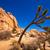 drzewo · parku · dolinie · pustyni · California - zdjęcia stock © lunamarina