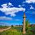yol · çapraz · Santiago · İspanya · adam - stok fotoğraf © lunamarina