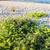 рок · растущий · пляж · Корнуолл · Англии · огня - Сток-фото © lunamarina