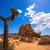 drzewo · parku · dolinie · pustyni · California · USA - zdjęcia stock © lunamarina